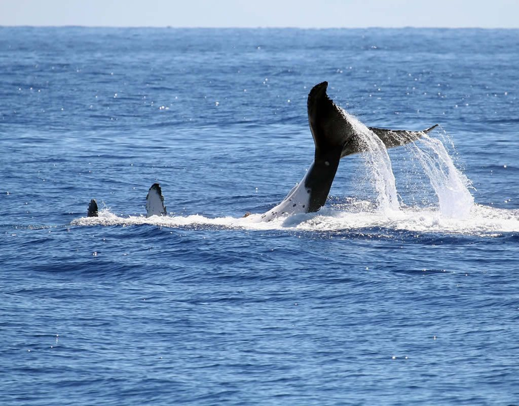 Whale Watch, Imperia, San Remo, Bordighera