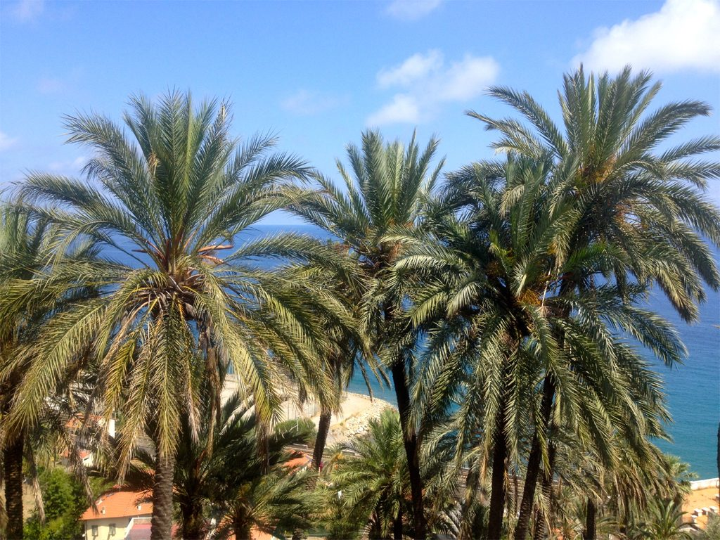 Under the Palm Trees on the Riviera